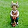 Ms Gardening Squirrel